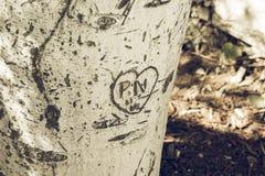 Ствол дерева с словом выреза стоковые изображения rf