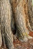 ствол дерева текстурированный расшивой Стоковая Фотография RF