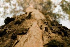ствол дерева Стоковые Изображения