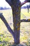 ствол дерева Стоковая Фотография RF