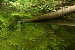 ствол дерева Стоковое Фото