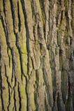 Ствол дерева background_1 стоковое изображение
