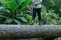Ствол дерева Hiker идя, шаги пешей девушки туристские на журнал Стоковые Изображения