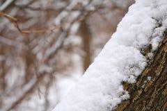 ствол дерева snowbank Стоковые Изображения RF