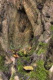 Ствол дерева Стоковая Фотография