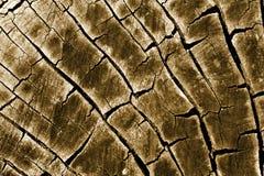 ствол дерева Стоковые Фото