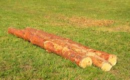 3 ствола дерева на зеленой траве Стоковая Фотография RF