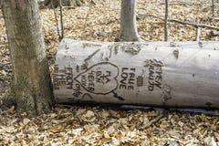 Ствол дерева высек при сердца и сообщения влюбленности лежа на осени Стоковое Фото