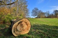 Ствол дерева в ландшафте осени Стоковые Изображения