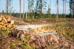 Ствол дерева в лесе Стоковые Изображения