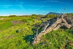 Ствол дерева в зеленом луге Стоковое Изображение