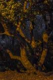 Ствол дерева в парке поздно на ноче Стоковые Изображения RF