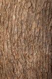 Ствол дерева в парке Стоковое Изображение RF