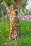 Ствол дерева в парке Стоковая Фотография