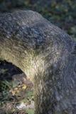 Ствол дерева в древесинах Стоковое Изображение