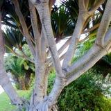 Ствол дерева в саде Стоковая Фотография RF