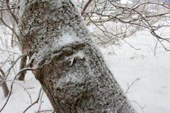 Ствол дерева в снеге в зиме стоковая фотография rf