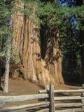ствол дерева гигантской секвойи Стоковое Фото