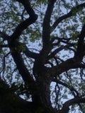 Ствол дерева заключения Стоковая Фотография RF