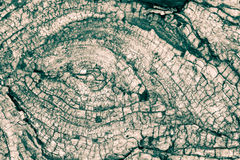 Ствол дерева звенит b Стоковая Фотография