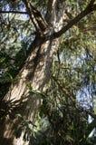 Ствол дерева и ветви 2 Стоковое Изображение RF