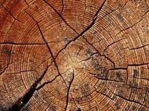 Ствол дерева и свои ежегодные кольца Стоковая Фотография RF