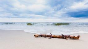 Ствол дерева на береге моря, ландшафте природы Стоковое Фото