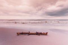 Ствол дерева на береге моря, ландшафте природы Стоковое Изображение