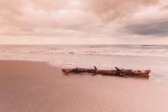 Ствол дерева на береге моря, ландшафте природы Стоковые Изображения RF
