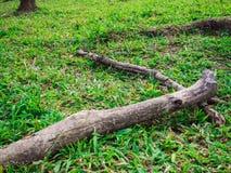 Ствол дерева на зеленой траве Стоковая Фотография