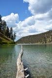 Ствол дерева на озере Стоковое Фото