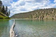 Ствол дерева на озере Стоковое фото RF