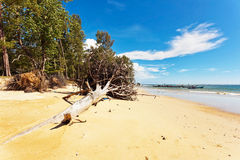 Ствол дерева на пляже Стоковое Изображение