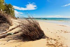 Ствол дерева на пляже Стоковая Фотография