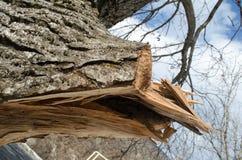 Ствол дерева на фронте Оно резало ветвь с сформированным отверстием внутрь Часть коры дерева отрезана  Серии зеленых кустов I Стоковая Фотография