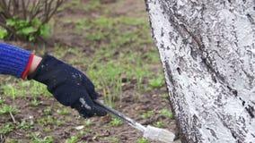 Ствол дерева побелки садовника с мелом в саде, дереве заботит весной движение медленное акции видеоматериалы