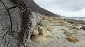 Ствол дерева помытый вверх на береге Стоковая Фотография RF