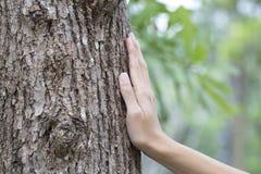 Ствол дерева руки женщины касающий Стоковое Изображение