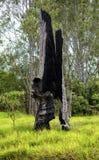 Ствол дерева сгорели полостью, который от лесного пожара стоковые фото