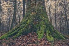 Ствол дерева с мхом в лесе Стоковая Фотография RF