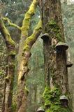 Ствол дерева с мхом и polypore Стоковая Фотография RF