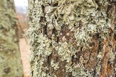 Ствол дерева с мхом Стоковое Изображение