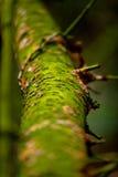 Ствол дерева с некоторым мхом Стоковые Изображения