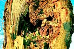 Ствол дерева с цветком внутрь Стоковые Изображения