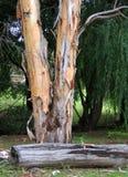 Ствол дерева 2911 Стоковое Изображение