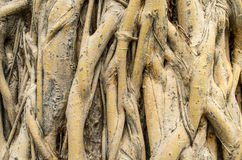 Ствол дерева Стоковые Изображения RF
