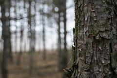 Ствол дерева Стоковое Изображение