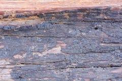 Ствол дерева Стоковое Изображение RF