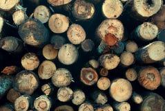 Ствол дерева ut ¡ Ð Стоковые Фотографии RF