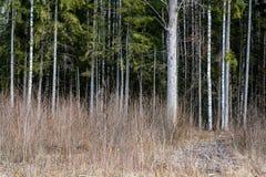 Стволы дерева в лесе Стоковая Фотография